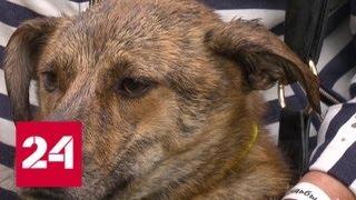 Благотворительная выставка собак прошла в центре Москвы - Россия 24