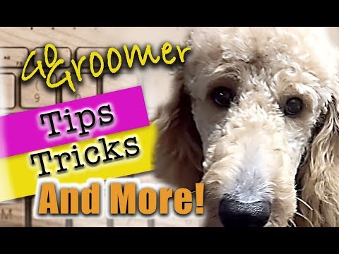 GoldenDoodle Grooming-Tips and Products Episode 2 (Go Groomer)