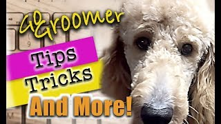 GoldenDoodle Grooming-Tips and Products