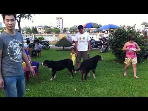 OFF chó Hải Phòng ngày 31/7/2011. Part1