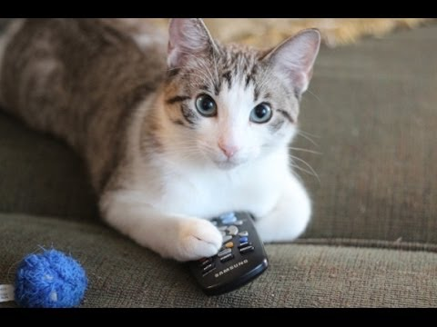 Funny Cats Video - Funny Cat Videos Ever- Funny Videos ...  Funny Cats Vide...