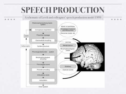 Psycholinguistics: Speech Production