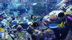 3 HOURS of Beautiful Coral Reef Fish, Relaxing Ocean Fish, Aquarium Fish Tank & Relax Music 1080p HD