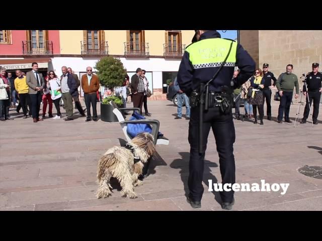 Vídeo noticia: Presentada la Unidad Canina de la Policía Local de Lucena