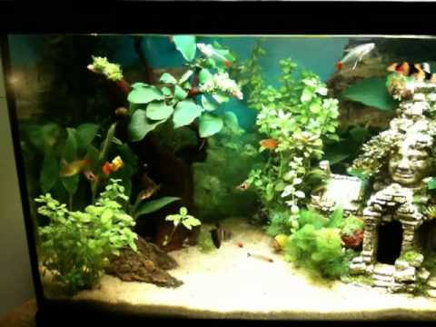 Acquario tropicale acqua dolce 60 lt youtube for Vendita on line acquari