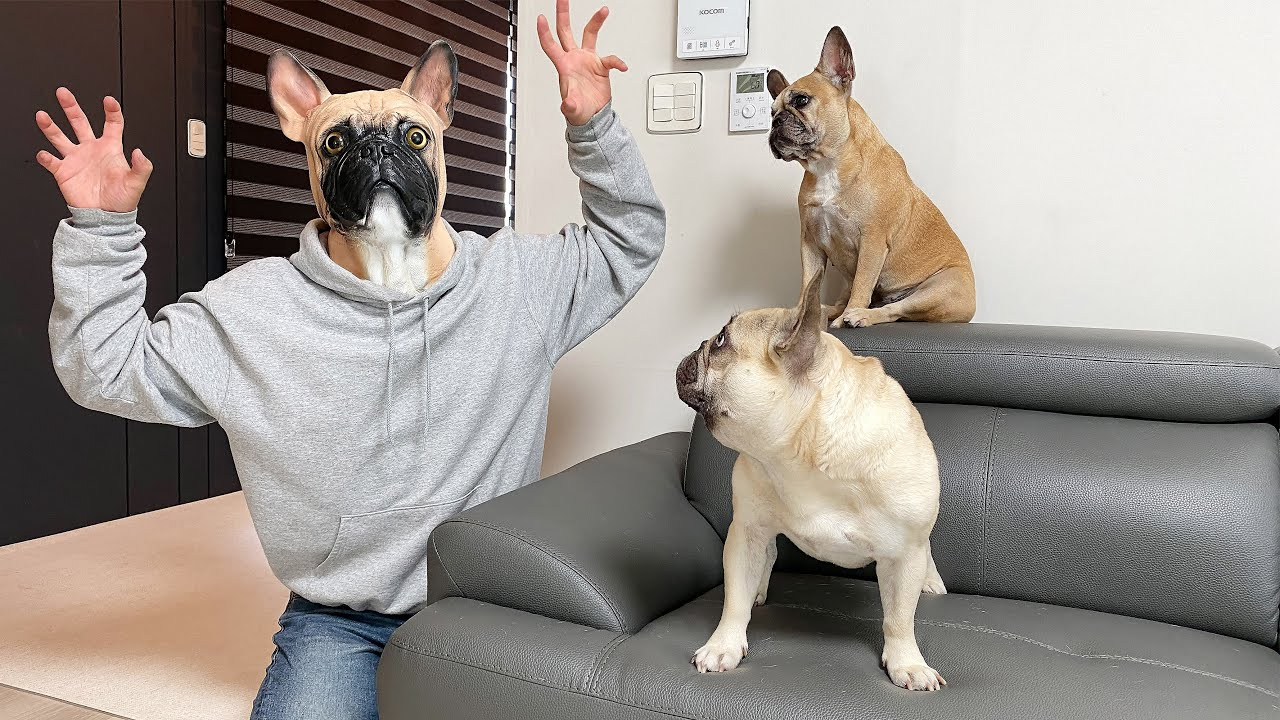 Funny Dog Mask Prank On My French Bulldogs! **FUNNIEST REACTIONS