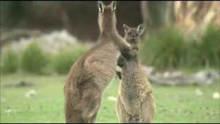 生き物たちの地球「オーストラリア編」