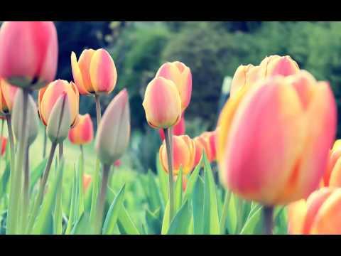 Ciro Visone & Rita Visone - The Countdown (Original Mix)