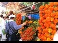 浅草 ほおずき市 TOKYO JAPAN Chinese Lantern Plant fair 東京観光 花の名所案内