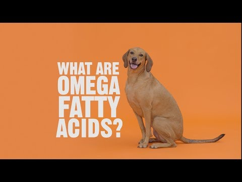 Why Does My Pet Need Omega Fatty Acids?