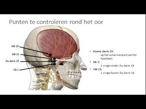 Koen Vanderloock – Tanden en organen