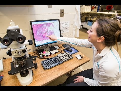 Wildlife Forensic Lab Livestream