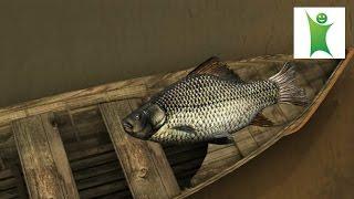 Игра спортивная трофейная рыбалка(Игра - http://www.gmood.ru/games/5009/index.html Игра симулятор спортивной рыбалки. Нужно выловить как можно больше рыбы за..., 2015-03-27T13:34:43.000Z)