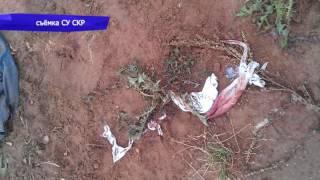 Собаки загрызли мужчину в Кирово-Чепецке, дело закончено. Место происшествия 09.11.2016