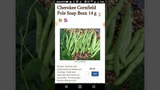 Cherokee Cornfield bean. Heirloom Seeds.