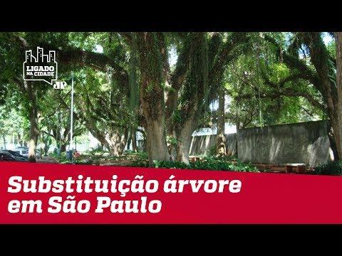 Ouvinte Reclama De Burocracia Para Substituir árvore Em São Paulo