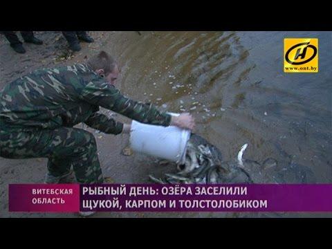 Вся недвижимость в Гомельской области и Беларуси на сайте