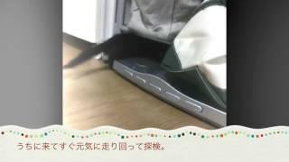 【初動画】ハヅキがうちにやってきた thumbnail