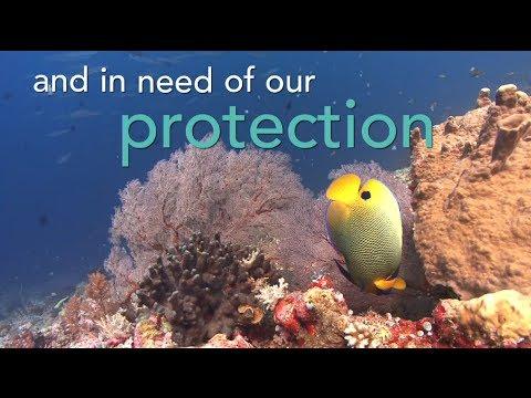 Introducing Global Ocean Legacy | Pew