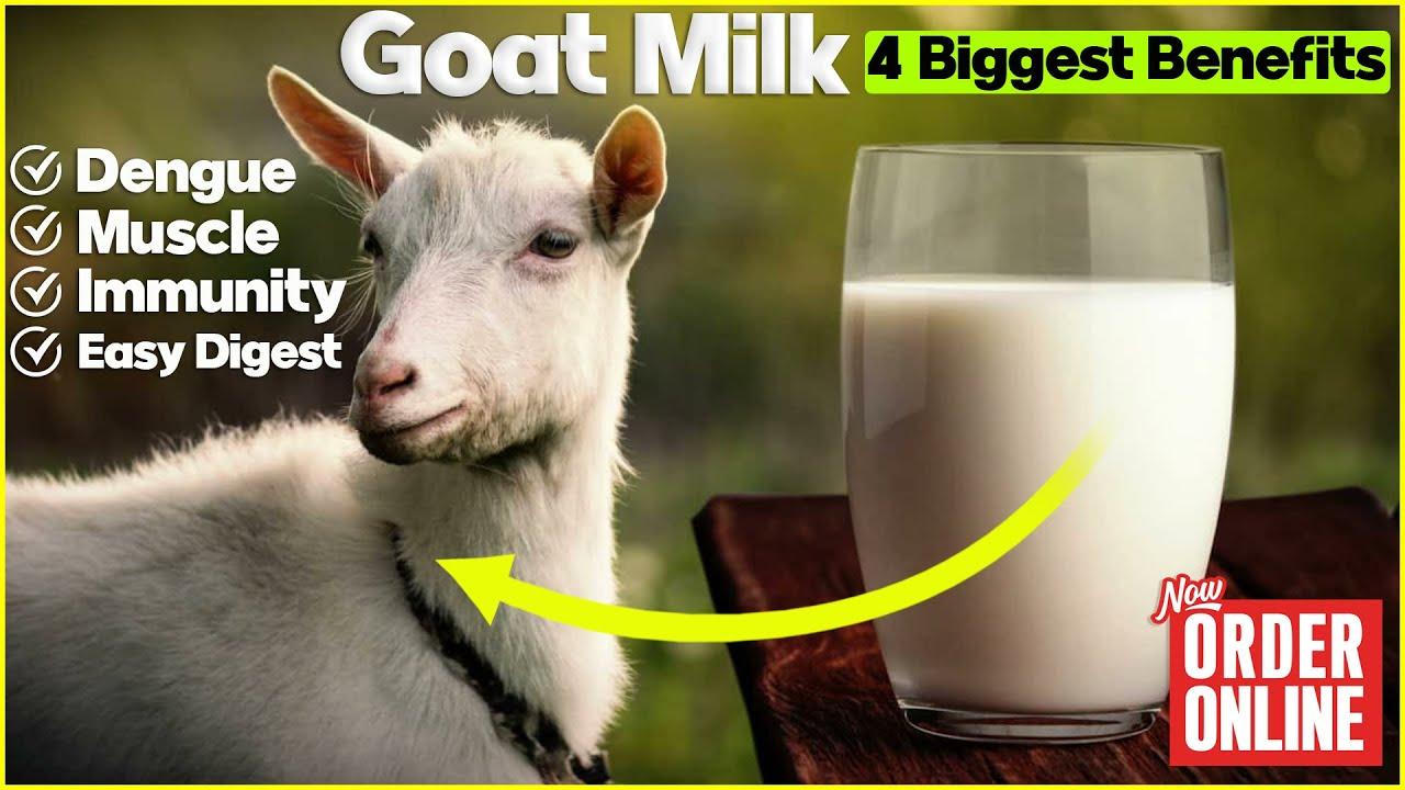 4 Biggest Health Benefits of Goat Milk   बकरी का दूध पीने से होंगे गजब के फायदे   #goatmilk