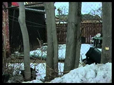 CHCH News: Police Identify Corpse Found In North Hamilton