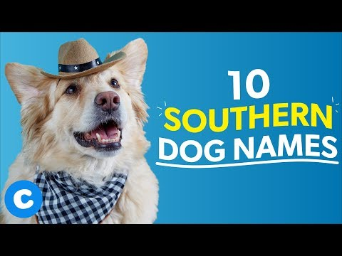 10 Southern Dog Names | Chewy