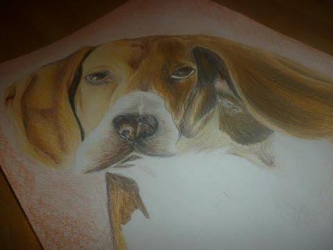 Disegno cane matita youtube for Cani da disegnare facili