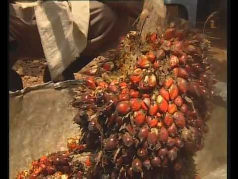 Palm kernel oil extraction machine in nigeria