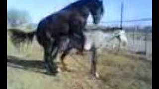 Repeat youtube video EL LLAVERO Y LA MORA DEL TIGRE