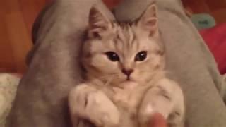 КОТ ПОД ГИПНОЗОМ Flashing cat under hypnosis, Мимишечный котенок под гипнозом