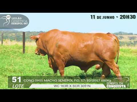 LOTE 51   CONQ 905