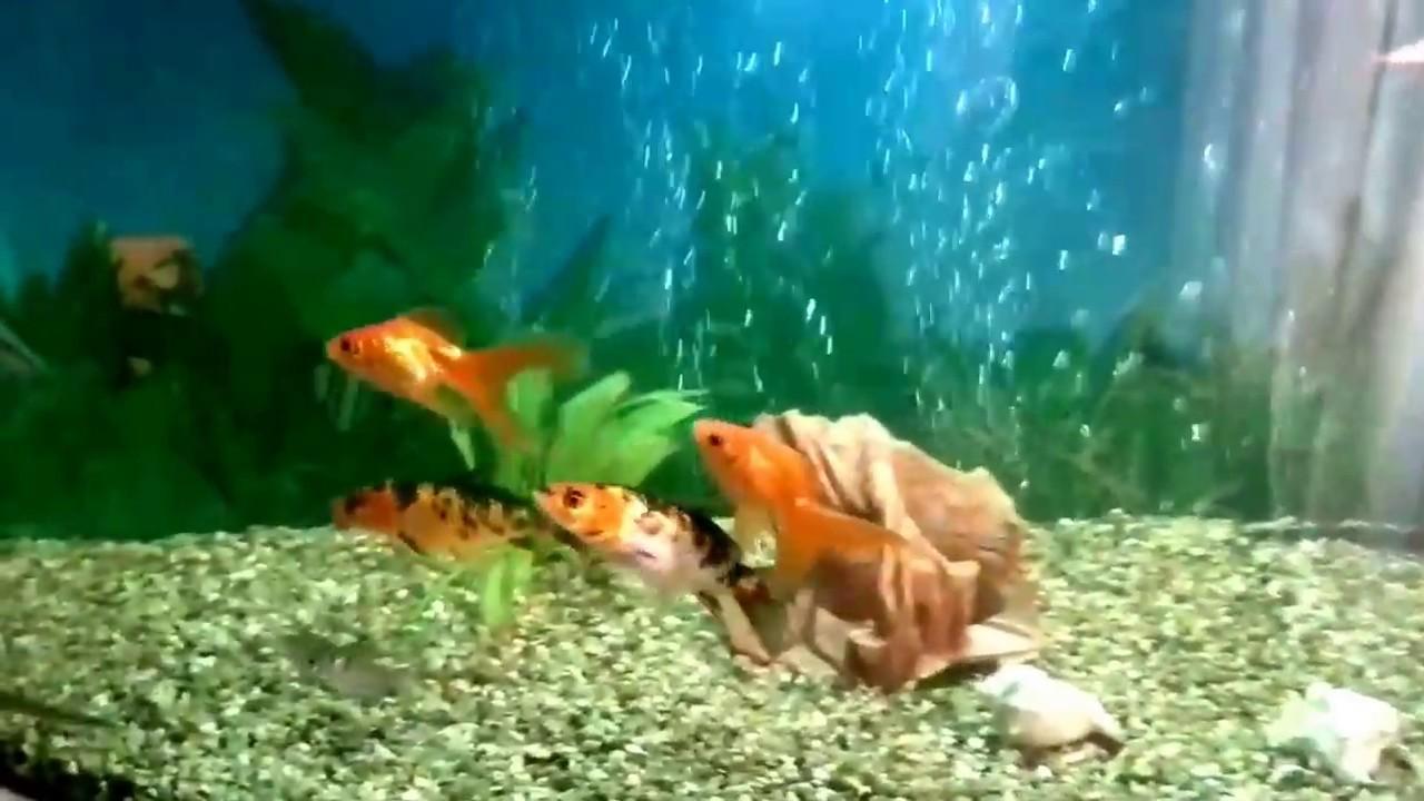 Как сделать воду в аквариуме кристально чистой фото 649