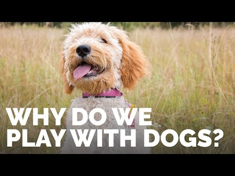 Why Do We Play With Dogs? - In the Classroom with Michael Ellis