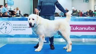 «Алабай 62» на интернациональной выставке собак «Евразия 2019»