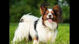 Top 10 Breeds of dogs