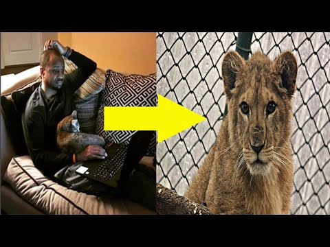 Heroes Learn Troubling Information About An Exotic 'Pet' And Decide To Intervene