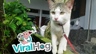 Cat Receives a Fishy Kiss    ViralHog
