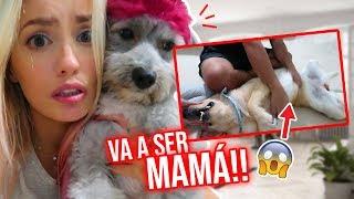 MI PERRITA VA A SER MAMÁ?!!!😱💗💗 | 12 Abril 2019