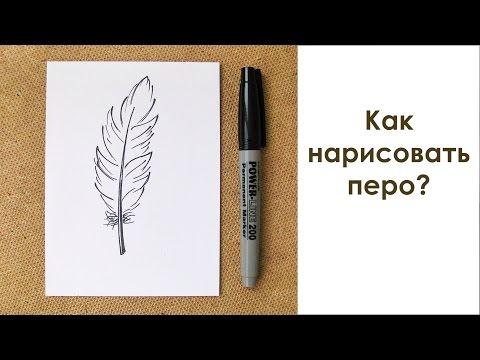 Как нарисовать перья птицы