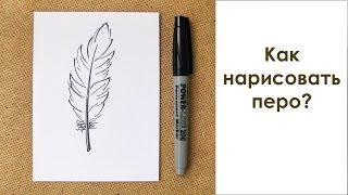 Как нарисовать перо?(Как нарисовать перо маркером? Просто и быстро. Смотрите пошаговое описание процесса на сайте: http://prosto-risuy.ru/ri..., 2015-03-27T07:14:08.000Z)