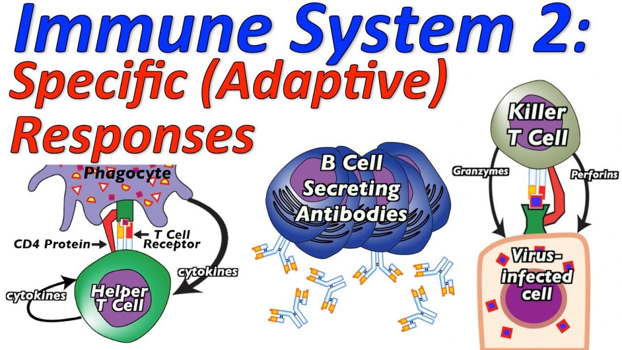 Immune System Response Cartoon
