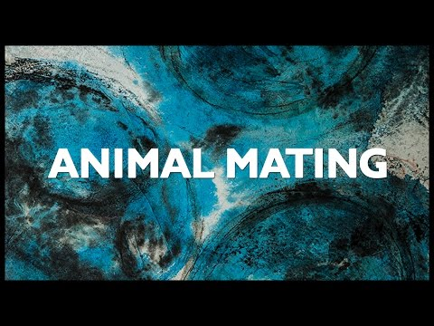 Animal Mating by Clade (Firstborn)