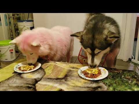 breakfast-with-the-waterwolves