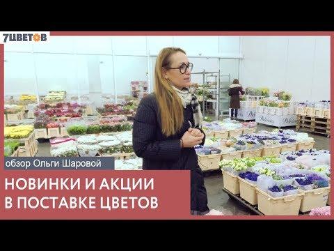 Цветочная база 7 цветов представляет: новинки в поставке срезанных цветов с Ольгой Шаровой