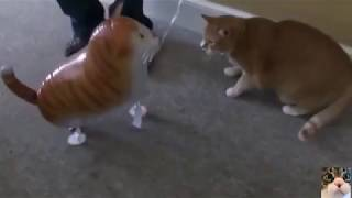 Толстый рыжий кот