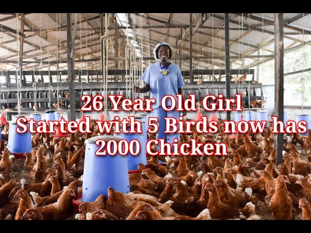26 YEAR OLD GIRL WHO STARTED WITH 5 CHICKEN AND NOW HAS 2000 CHICKEN in Uganda