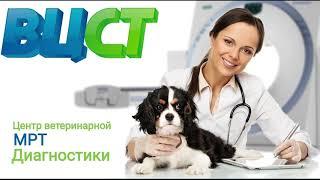 МРТ для животных ВЦСТ