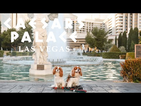 DOG FRIENDLY HOTEL IN LAS VEGAS // Caesar's Palace