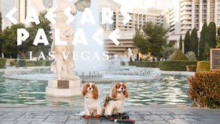 DOG FRIENDLY HOTEL IN LAS VEGAS // Caesar's Palace