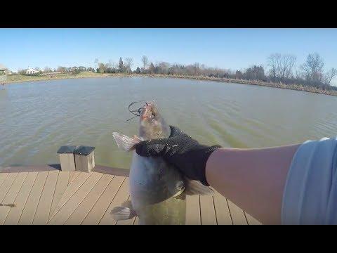 Catfishing With Shrimp + Garlic Powder